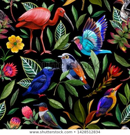 Linii ptaków śmierci zwierząt sylwetka latać Zdjęcia stock © njaj