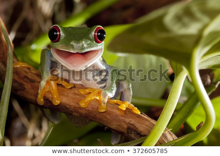 Smiling Frog Stock photo © macropixel