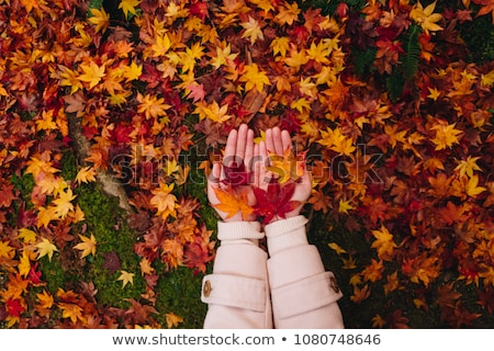 Background of japanese maple leaves in autumn with moss and tree Stock photo © Arrxxx
