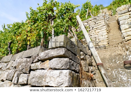 Staircase in the vineyards Stock photo © Zerbor