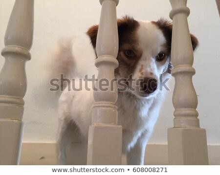 Hond naar bruine hond veranda outdoor Stockfoto © rhamm