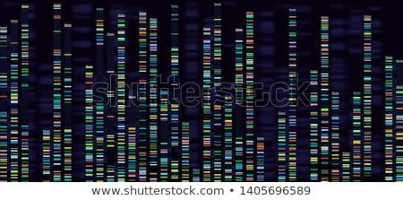 ADN · longtemps · structure · doubler · scientifique - photo stock © idesign