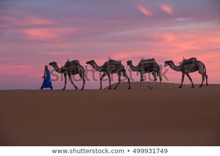 Deserto Marrocos norte África grama paisagem Foto stock © haraldmuc