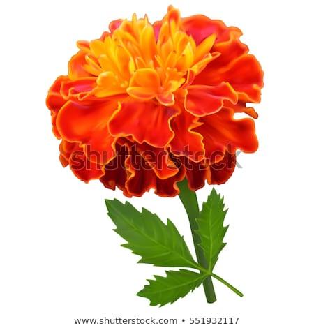 蝶 黄色 花 クローズアップ オレンジ 花 ストックフォト © stocker