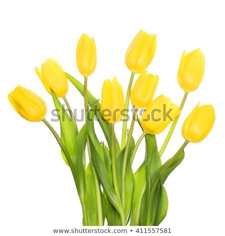 giallo · tulipani · crescita · verde · argilla · foglia - foto d'archivio © oleksandro