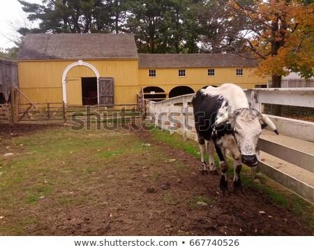 koe · hek · permanente · boeren · veld - stockfoto © rhamm