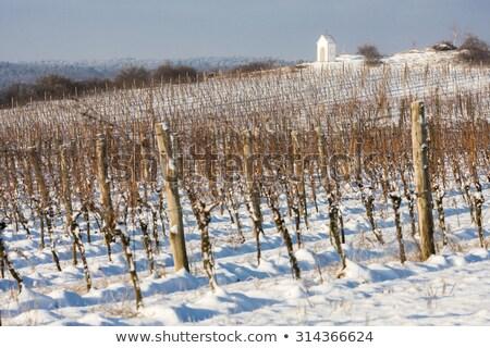 зима · виноградник · южный · Чешская · республика · здании · снега - Сток-фото © phbcz