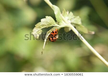 明るい てんとう虫 緑 色 フレーム ベクトル ストックフォト © aliaksandra