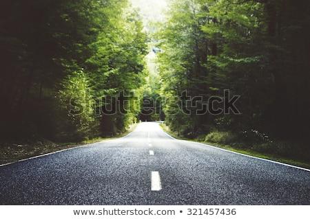 vidéki · út · nyár · reggel · vezető · erdő · sugarak - stock fotó © mikdam