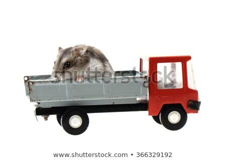 マウス 車 孤立した 白 幸せ 肖像 ストックフォト © jonnysek