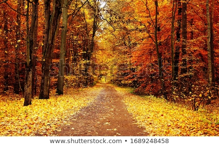 leaves on an road in the autumnal forest stock photo © ankarb