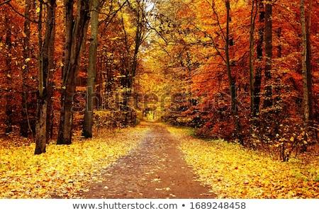 Bladeren weg bos bomen natuur Stockfoto © ankarb