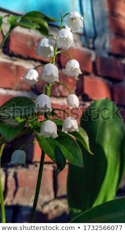 gyönyörű · régi · ház · bejárat · fa · lépcsőház · ház - stock fotó © artjazz