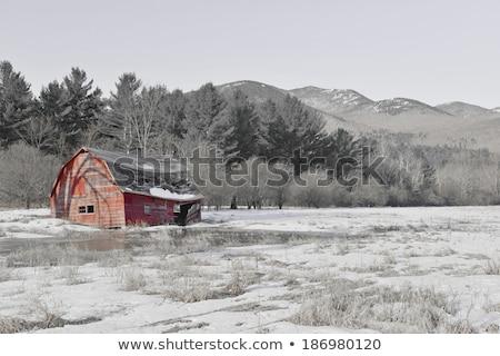 ağaç · gölgeler · kar · kış · gün · orman - stok fotoğraf © pixelsaway