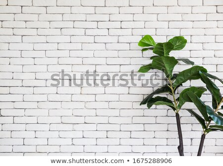 поддельный кирпича керамика текстуры внешний стены Сток-фото © stevanovicigor