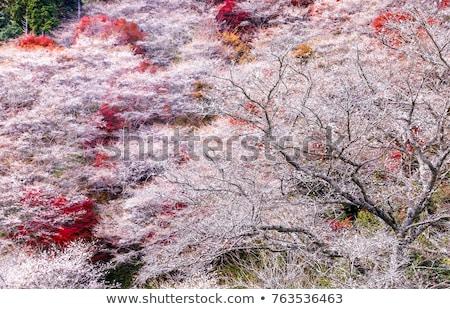 sakura · ősz · tájkép · virág · tavasz · virág - stock fotó © vichie81