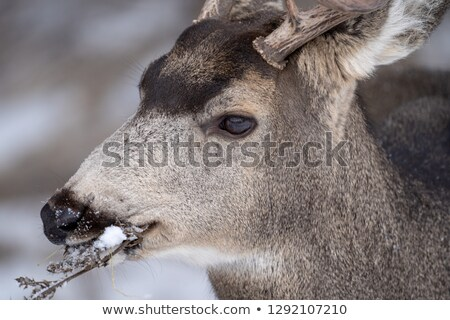 a mule in an alberta pasture stock photo © pictureguy