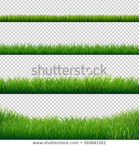 зеленая трава границе вектора изолированный белый Сток-фото © UPimages