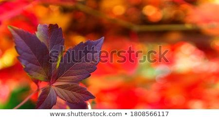 красный · лента · цветочный · шаблон - Сток-фото © milsiart
