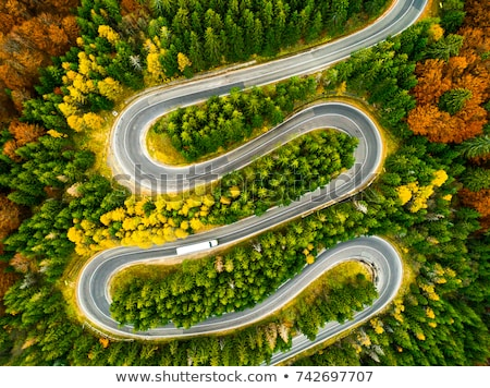 Aerial view of the green mixed deciduous-coniferous forest Stock photo © vlad_star