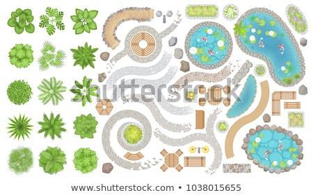 Establecer piedra estanque ilustración agua verde Foto stock © colematt