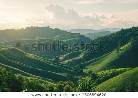 tropikalnych · lasu · krajobraz · zielone · drzew · pozostawia - zdjęcia stock © bluering