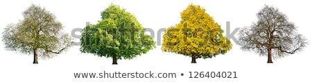 セット 工場 実例 自然 背景 芸術 ストックフォト © colematt