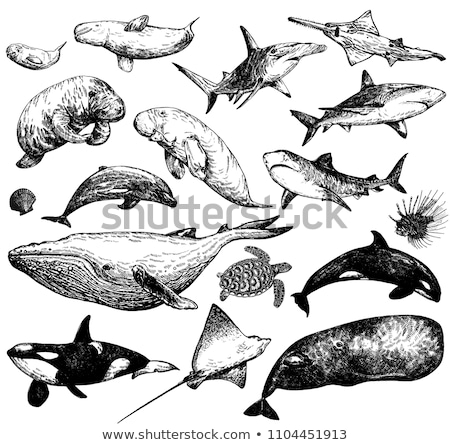 Rekina szkic stylu charakter pióro Zdjęcia stock © Arkadivna