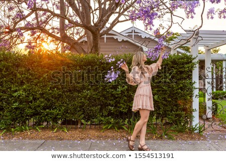 Admiring the purple Jacaranda tree flower clusters Stock photo © lovleah