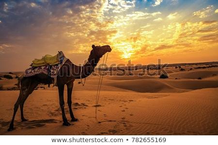 пустыне Индия песок небе закат индийской Сток-фото © dmitry_rukhlenko