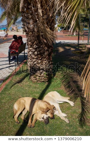 two cats in love under palms stock photo © dahlia