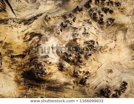 поверхность лес дерево стебель Кора завода Сток-фото © Traven