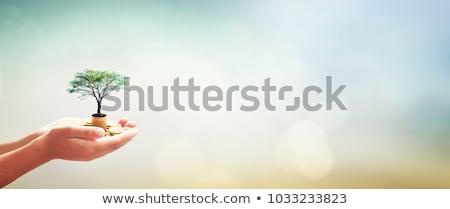 お金 · 成長 · 木 · 白人 · あごひげ · 男 - ストックフォト © iqoncept