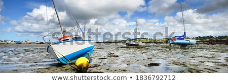 lots of fishing ropes close up stock photo © latent