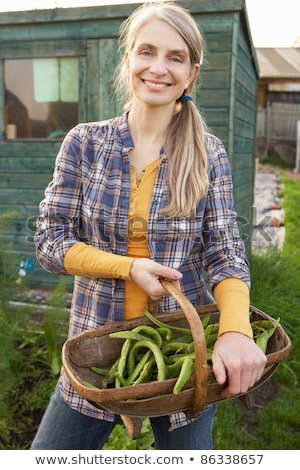 Woman picking fruit on allotment Stock photo © monkey_business