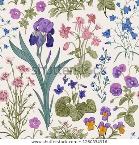 Gyönyörű virágmintás mező sekély fókusz természet Stock fotó © natika