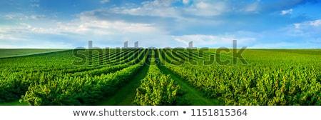 Mezőgazdasági mező erdő kék ég ősz tájkép Stock fotó © hraska