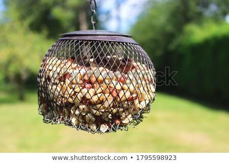 Bird feeder full of peanuts hanging in a tree Stock photo © sarahdoow