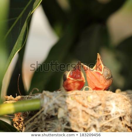 赤ちゃん · 鳥 · 白 · 飢えた · 食品 · 目 - ストックフォト © hin255
