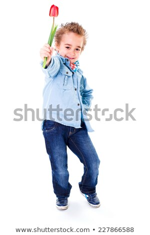 little boy in jeans offering red tulip stock photo © erierika