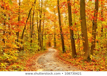 Pathway through the autumn forest Stock photo © franky242