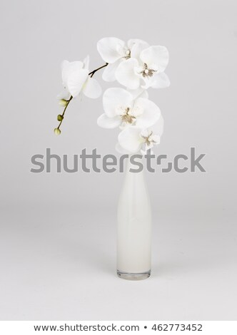 vase with orchid Stock photo © tanais
