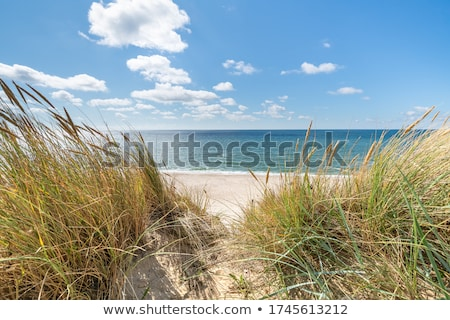 north sea with clouds and blue sky Stock photo © compuinfoto