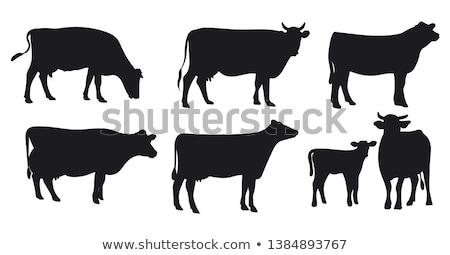inek · siyah · beyaz · bakıyor · kamera · çim · alan - stok fotoğraf © Hofmeester