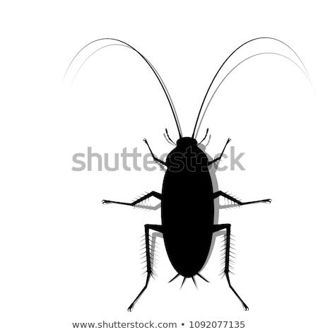 hamamböceği · siluet · örnek · beyaz - stok fotoğraf © istanbul2009