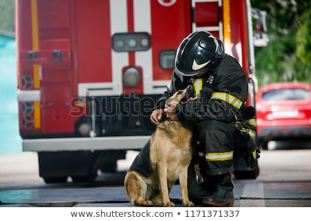 cão · bombeiro · bombeiro · fogo · machado · desenho · animado - foto stock © adrenalina