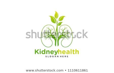 緑 健康 シンボル デザイン 医療 病院 ストックフォト © blaskorizov