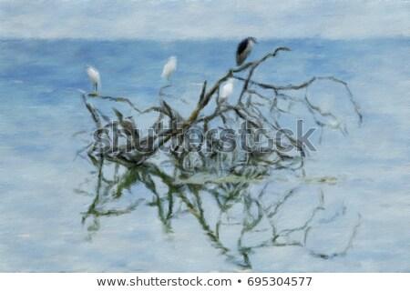 preto · língua · grama · pássaro · boca - foto stock © user_9323633