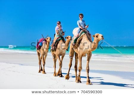 Aile deve örnek doğa çöl kum Stok fotoğraf © adrenalina
