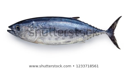 Bluefin tuna Thunnus thynnus saltwater fish Stock photo © lunamarina